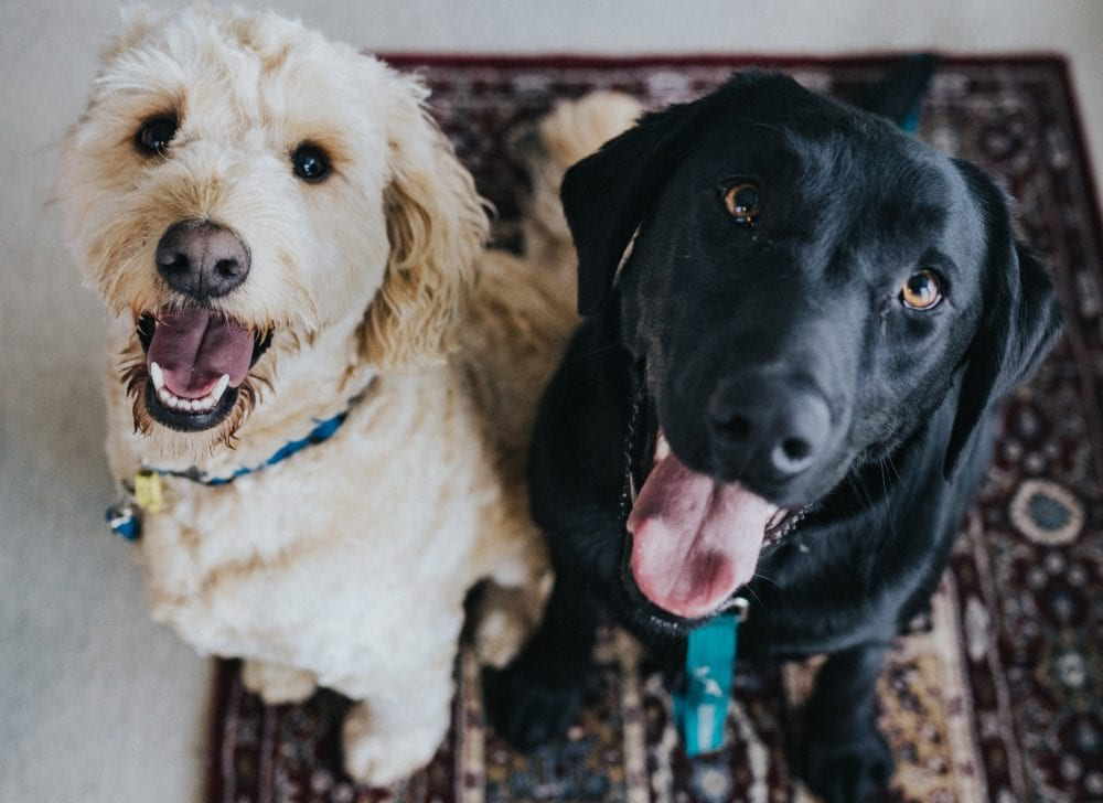 homeaway pet friendly travel vacation rental collection emancipet